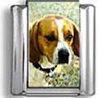 Beagle Photo Charm