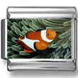 Clown Fish Photo Charm