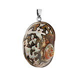Sterling Silver Large Oval Pendant with Brown-White Turbo Shell
